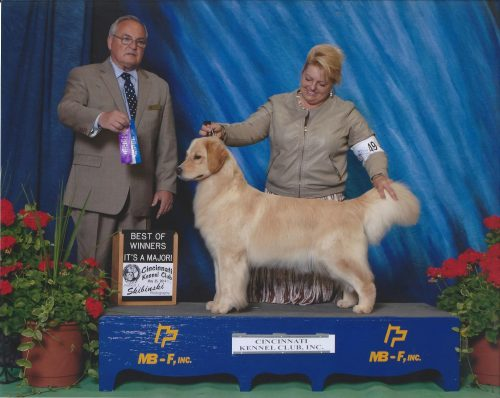 """""""Pixie"""" – Am GCH CH Summit Dichi Picture Perfect"""