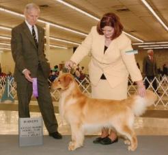 """Rikki"" – Am CH Dichi Ya Gotta Have Vision, CGC, CGCA Community Canine, TT, Therapy Dog Certified"